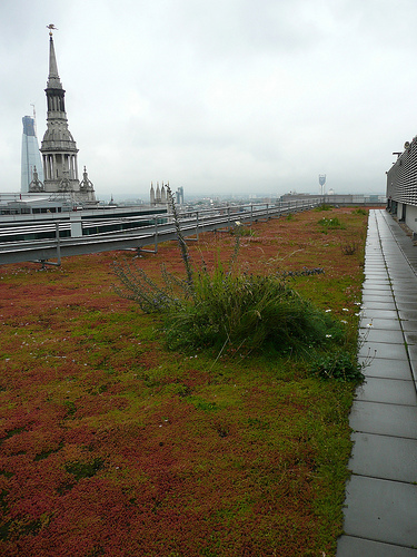 green roof, london ec2